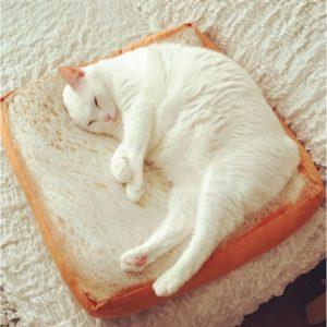 Shine,lit pour chat, tranche de pain, idée cadeau, déco, objet original, mignon, rigolo, insolite